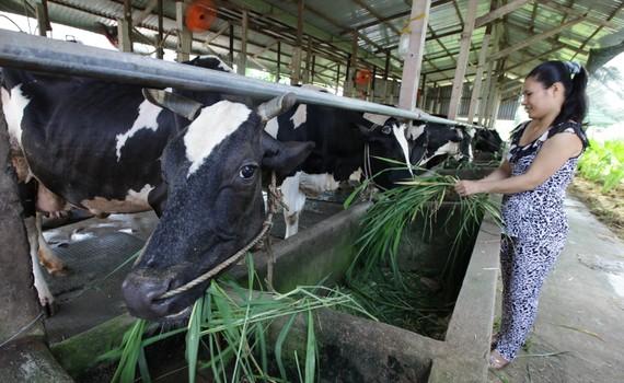 Xây dựng thương hiệu hàng nông sản chủ lực Củ Chi