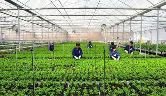 Tháo gỡ vướng mắc cho vay nông nghiệp công nghệ cao