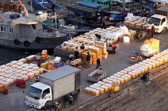 Hải sản đánh bắt được tập kết tại bến cảng Cái Rồng, huyện Vân Đồn, tỉnh Quảng Ninh, để mang đi tiêu thụ. (Ảnh: Quang Quyết/TTXVN)