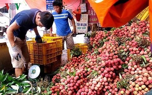 Vải thiều của Việt Nam hiện vẫn còn hạn chế về thị trường xuất khẩu.