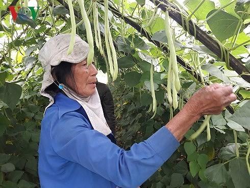 """Chữa """"bệnh"""" bí đầu ra của nông sản Việt"""