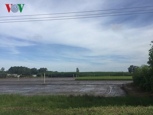 Khu vực xây dựng sân bay chủ yếu canh tác cây tràm bông vàng và lúa