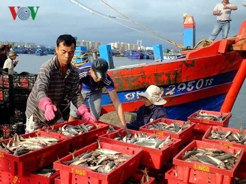 Nếu ngư dân làm đúng theo quy định, giá trị sản lượng đánh bắt hải sản sẽ cao hơn rất nhiều.