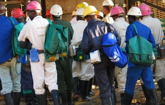 Công ty khai thác vàng lớn thứ 7 thế giới cắt giảm 1/3 số lao động