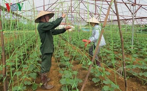 Nông nghiệp Việt Nam có thể mất vị thế nếu không kịp thời ứng dụng khoa học và công nghệ.