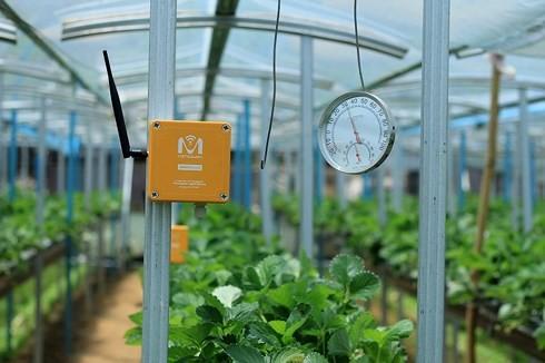 Nông nghiệp thông minh: Đừng làm nửa vời