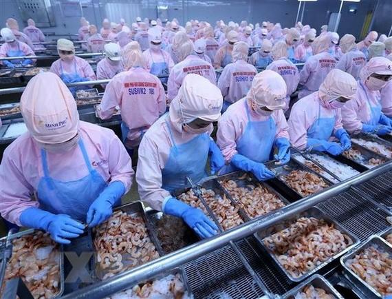Chế biến tôm xuất khẩu tại nhà máy của Công ty Cổ phần thủy sản Minh Phú, tỉnh Hậu Giang. (Ảnh: Vũ Sinh/TTXVN)