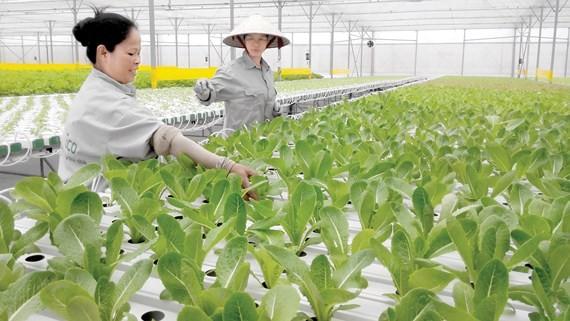 Tháo dần rào cản việc tích tụ đất nông nghiệp