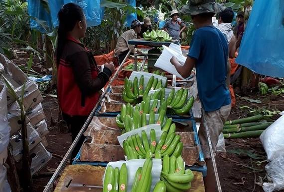 Tăng cường chế biến nâng cao giá trị rau quả