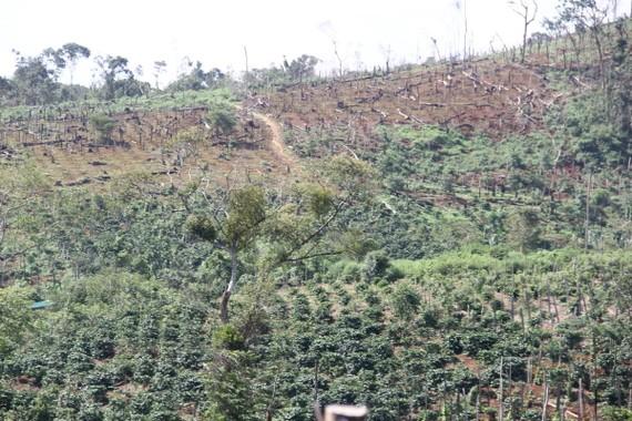 Nhiều diện tích đất rừng ở Đắk Nông bị phá và cấp quyền sử dụng đất sai quy định