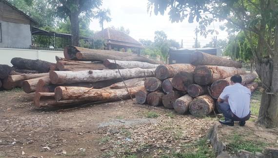 """Số gỗ lậu của Phượng """"râu"""" bị Bộ Công an bắt giữ"""