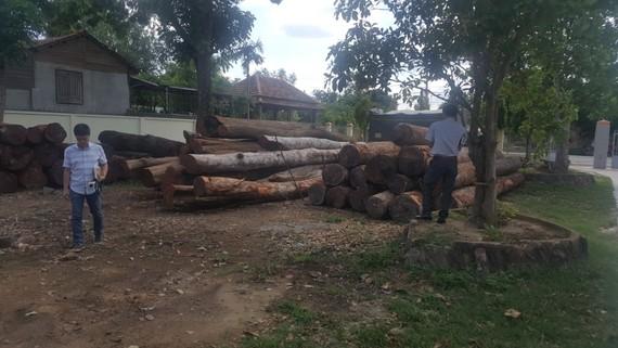 """Cơ quan chức năng thu giữ hàng trăm khối gỗ của Phượng """"râu"""""""