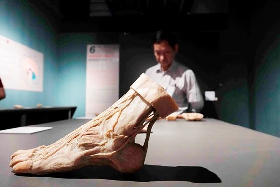 Mẫu vật từng trưng bày tại triển lãm. Ảnh: DŨNG PHƯƠNG