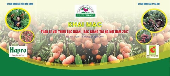 "Luc Ngan ""Thieu"" lychee week opens in Hanoi (Photo: san24h.vn)"