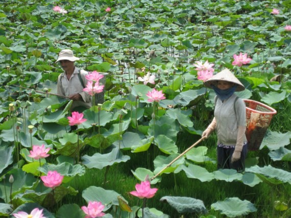 Dong Thap Lotus Festival opens