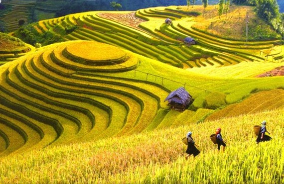 Terraced rice fields in the mystical mountain town of Sa Pa. (Source: VNA)