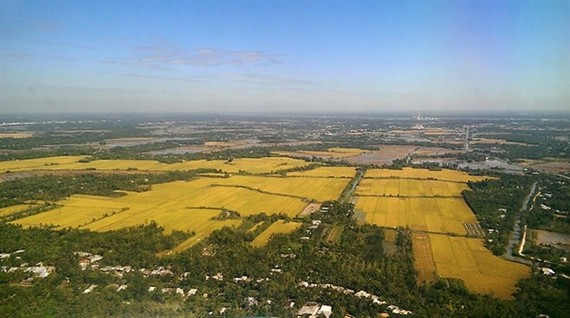 Rice fields in ​Thot Not district in the Mekong Delta province of ​Can Tho (Photo: VNA)