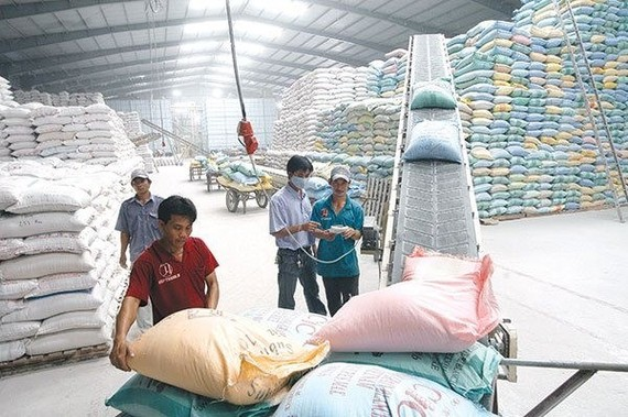 The World Rice Conference is an important opportunity for Vietnamese businesses to meet and seek partners in trading rice and to advertise Vietnamese rice products. (Photo: baodautu.vn)