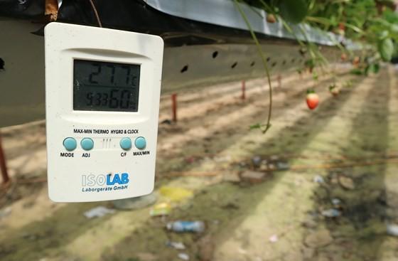 A high- tech strawberry garden in Da Lat