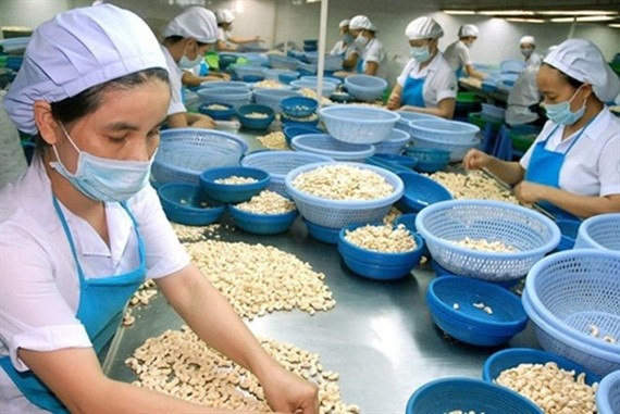 A cashew processing plant in Binh Phuoc province. (Photo: VNA)