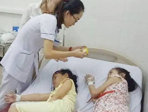 Primary students in Nghe An province are hospitalized due to eating wutong seeds (Photo: SGGP)