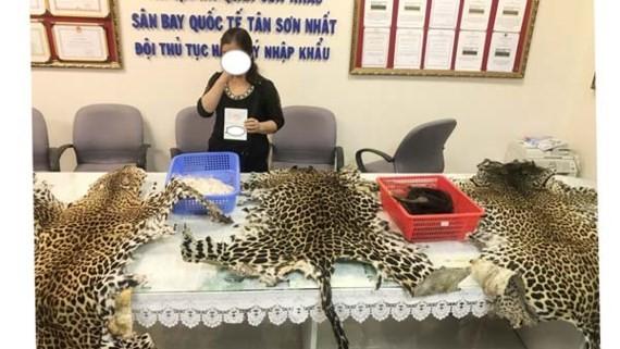 Customs officers seize over 4kg elephant tusks