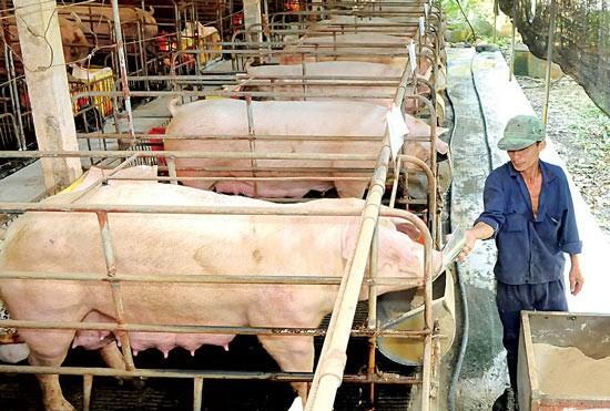 Pork price surges