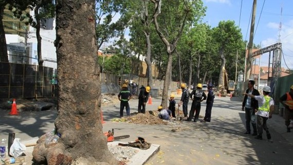 HCMC removes trees for bridge construction
