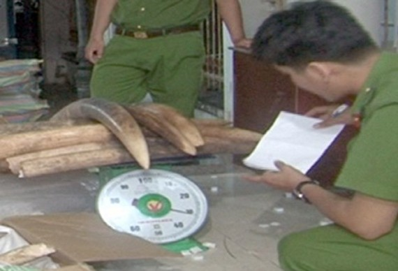 Police officers praised for seizing 1.4 tons of tusks