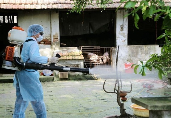 A medical worker is spraying chemical to prevent dengue fever (Photo: VNA)