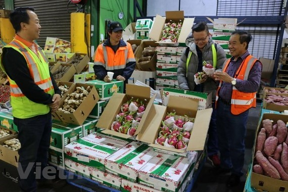 Vietnamese dragon fruits have been exported to Australia. (Source: VNA)