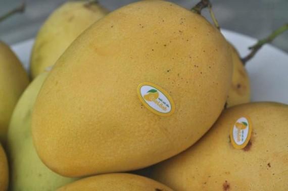 Cao Lanh mango (Source: Internet)
