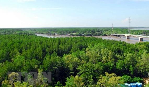 Vietnam's coastal forest coverage reaches 17 percent