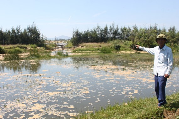 Shrimp farming firm fined for polluting environment
