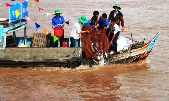 Over 7.6 tonnes of fish fry released in An Giang