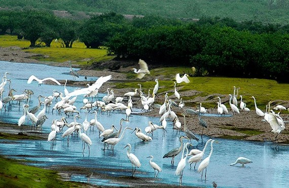 Biodiversity corridor to be built in central provinces