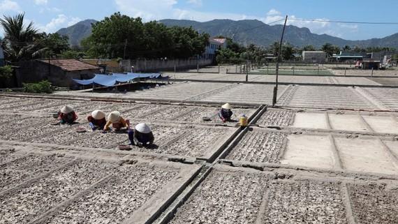 ADB project to modernize Vietnam's irrigation systems
