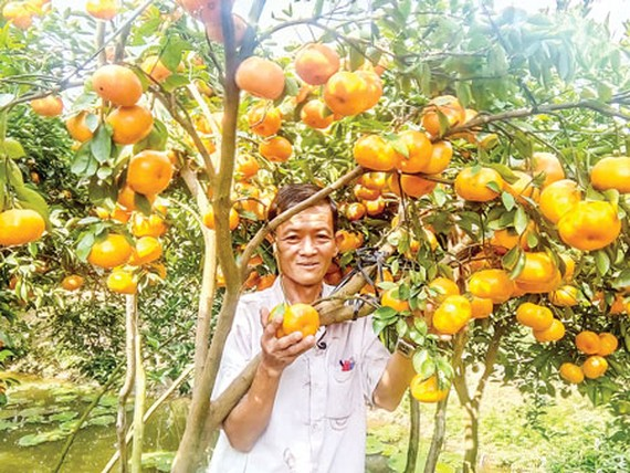 Vietnamese agriculture in Industry 4.0 era