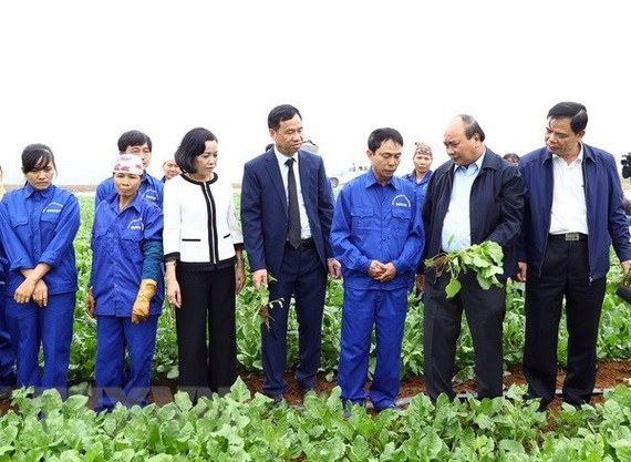 Prime Minister Nguyen Xuan Phuc (second from right) visits a field of the Dong Giao Foodstuff Export JSC in Ninh Binh province. (Photo: VNA)
