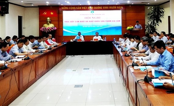 Vietnam to optimize chicken raising to compensate loss from ASF