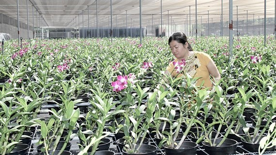 An orchid farm in Cu Chi District (Photo: SGGP)