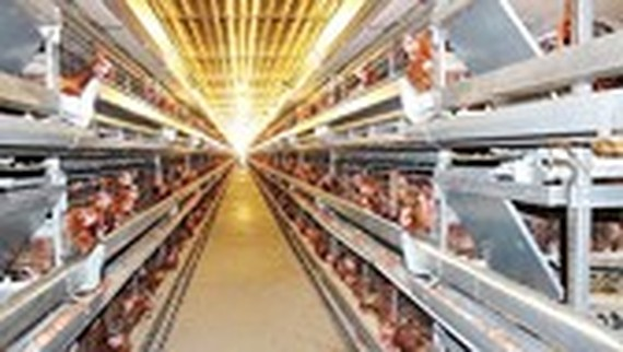 Agreement on building production chain of poultry meat for export