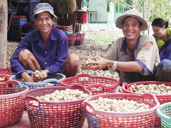 Vietnam boosts cultivation, exports of mushroom