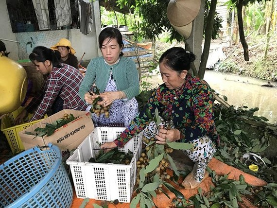 Significant role of enterprises, cooperatives in promoting North, South's fruits