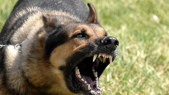 46 dog bite-related deaths reported countrywide