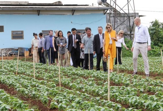 ueen Maxima of the Netherlands visits a farming model in Lam Dong province (Source: saigongiaiphong.vn)