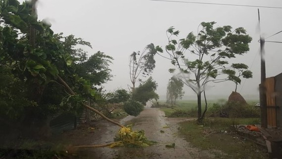 Trees are uprooted by strong wind