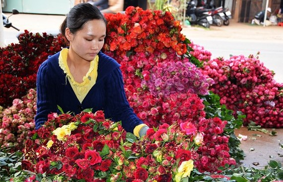 Flower price in Da Lat prior to Teacher's Day has jumped double or triple