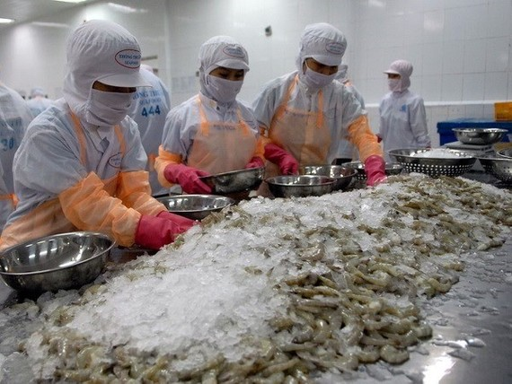 Whiteleg shrimp continues to make up most of Vietnam's exported shrimp products (Photo: VNA)