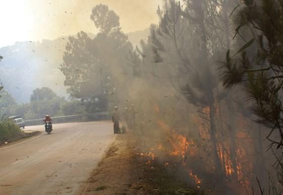 Vegetation fire occurs along Prenn Pass near Da Lat city (illustrative photo:SGGP)